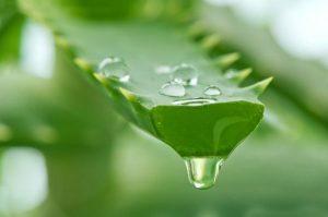 4 loại nước ngâm trị hôi chân hiệu quả nhất -3