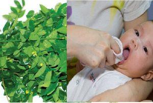 Rơ lưỡi cho trẻ bằng lá ngót